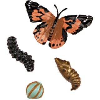 Butterfly Life Cycle Stages Characters, Plastic   4 Piece Set; no