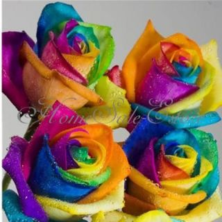 50 RARE Rainbow Rose Flower Seeds Your Lover Multi Color Home Garden Plants