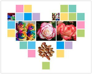 RARE Rainbow Rose Flower Seeds Your Lover Multi Color Plants Home Garden A