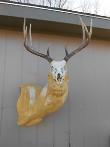 4x4 Whitetail Deer Skull Previous Years Sheds Antlers Mule Mount Elk Rack