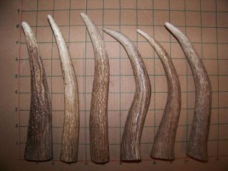 "Elk Tines Shed Antler Dog Chews Craft Knife Handles 8 9"" Whitetail Mule Deer"
