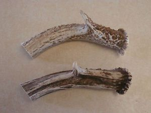 2 Deer Antler Knife Handles Dog Chews Elk Moose Sheds Bowie Knife Handle