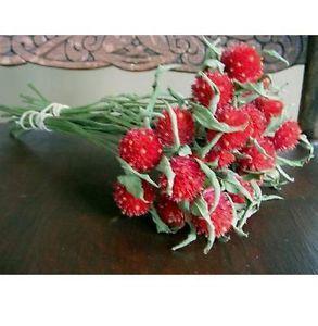 Dried Flowers Red Globe Amaranth Decor Craft Floral Shabby Primitive Prim Decor
