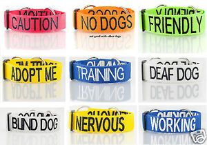Fastest Selling New Doggie Trend Dog Collar Lead Non Pull Harness by Dexil