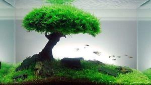 Xmas Moss Live Aquarium Plant Java Fish Tank Fern Aquatic Seed Green Pond AQ 9D