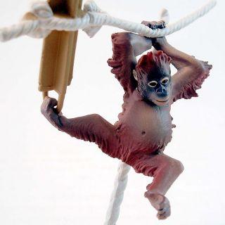 Wildlife Animal Endangered Species Planet Orangutan Kid
