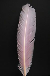 "10 Turkey Quills 10 12"" Dyed Light Pink Craft Feathers Indian Dress Costume"