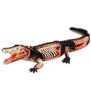 Crocodile Anatomy Model Puzzle 4D Vision Kit 26114 Tedco Science Toys
