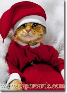Cat in Santa Suit 10 Cute Boxed Christmas Cards by Avanti Press