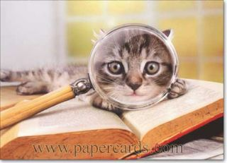 Cat with Magnifying Glass Funny Graduation Card Greeting Card by Avanti Press