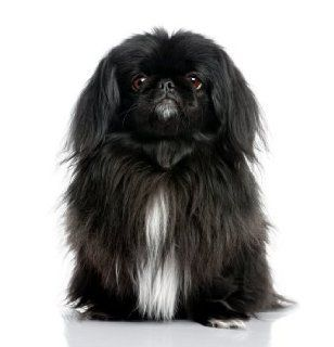 Pekingese ~ Dog Breed ~ Edible Image Cake / Cupcake Topper: Everything Else