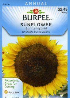 Burpee 31254 Sunflower Sunny Hybrid Seed Packet  Flowering Plants  Patio, Lawn & Garden
