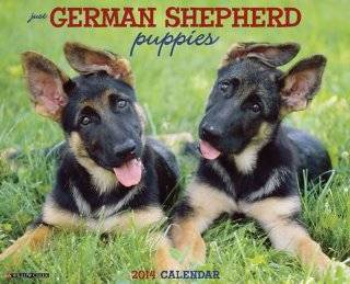 German Shepherd Puppies   2014 16 Month Calendar   Wall Calendars