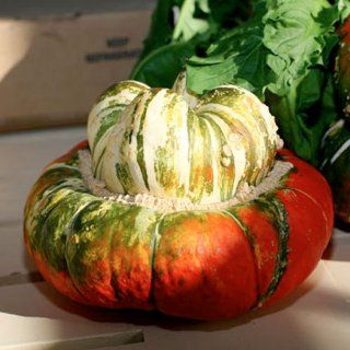 "30 Seeds, Gourd ""Turks Turban"" (Cucurbita maxima) Seeds by Seed Needs): Patio, Lawn & Garden"